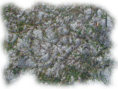 Floor_Edge-Grass_Sandy_ERN.png